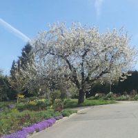 Frühjahrshypnose